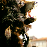 Fête de l'Ours Saint Laurent de Cerdans