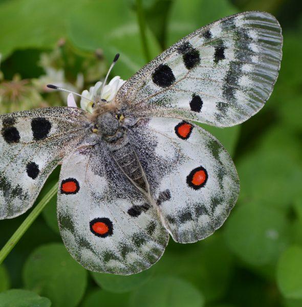 Conférence sur les papillons et petites bêtes